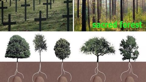تبدیل گورستان به جنگل یادبود