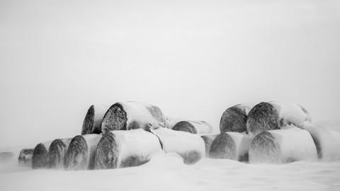 نگاهی اجمالی به زندگی آرام یک دامدار در مونتانا