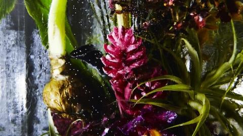گل های یخی آزوما ماکوتو