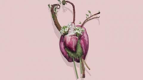 عکاسی ارگان های بدن با گلها