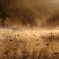 Matthew Holland – Coots Fog