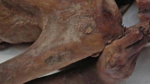 کهن ترین خالکوبی جهان روی مومیایی مصری پیدا شد